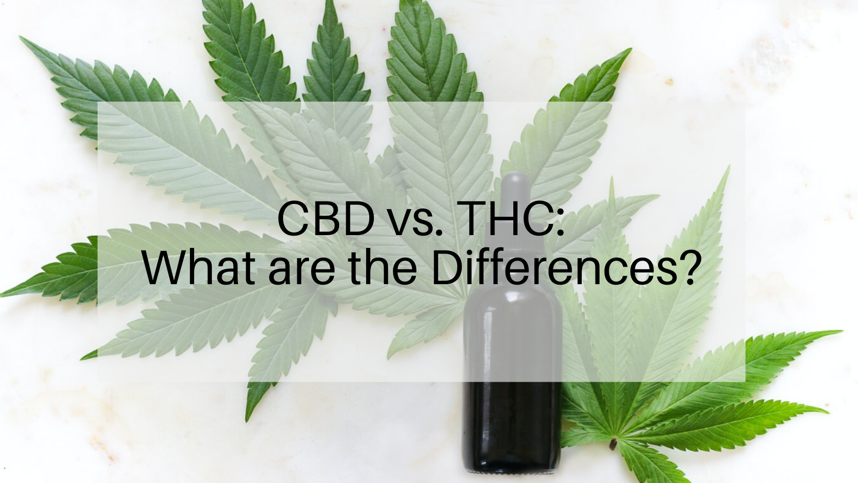 CBD vs. THC: What are the Differences?